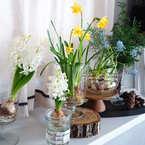 【連載】《100均》春のおしゃれなボタニカル生活!球根植物のステキな飾り方