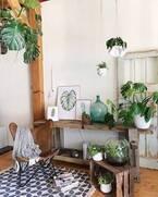 さりげなく飾っておしゃれに♪海外インテリアから学ぶ観葉植物のある空間