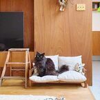 猫と暮らすナチュラルインテリア。おしゃれで快適な空間づくりの実例集