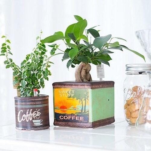 家で緑を楽しむ!インテリアグリーンを上手に取り入れる方法をご紹介