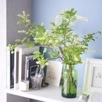 【連載】高コスパな《ニトリ&IKEA》の花瓶♪夏まで飾って楽しめるグリーンで涼しげ森林浴気分