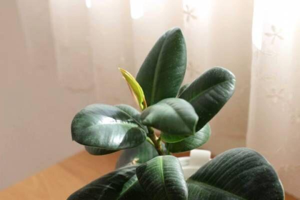 無印 底面給水 観葉植物6