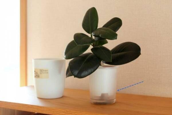 無印 底面給水 観葉植物2