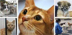 画像:フェリシモ猫部™わんにゃん支援活動