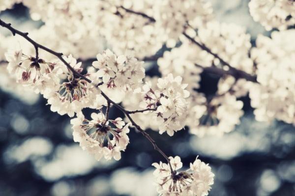 今しか買えない!桜コスメで春を先取り♪