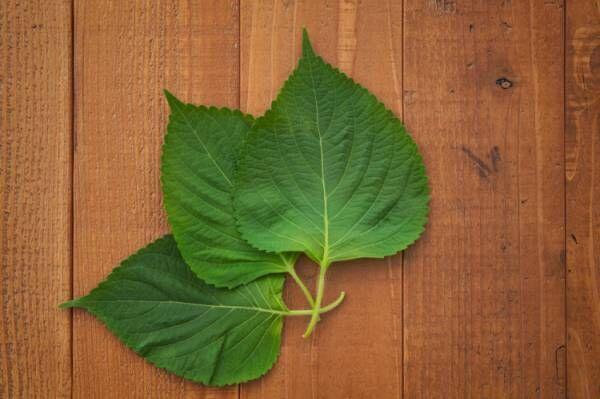 エゴマの葉に含まれている栄養素