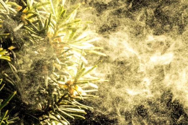 花粉や大気の汚れ