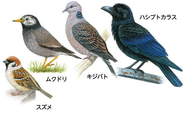 学習指導要領の改訂で学校教育が変わる 身近な生き物をみてみよう!「鳥」
