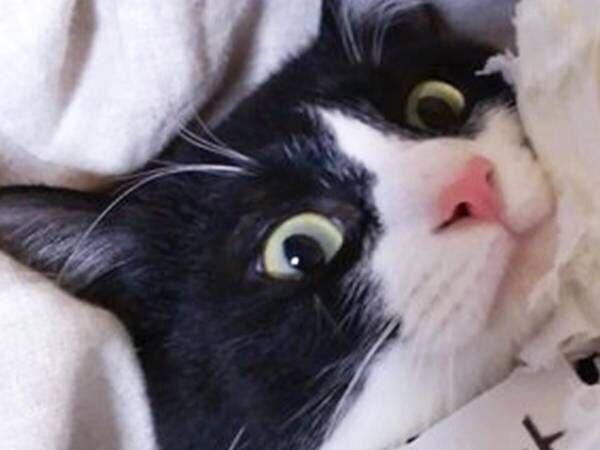 「いくら猫でもね、許されませんよ!」 猫が破壊した『大事なもの』とは?