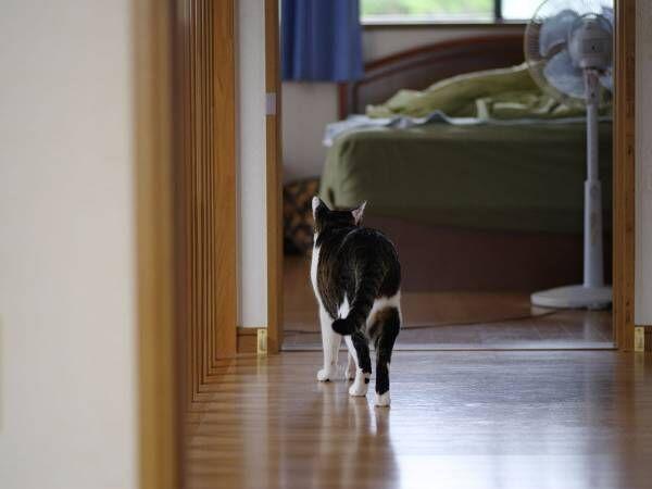 知っておくだけでも安心できる 感染した飼い主に代わりペットを預かるプロジェクト