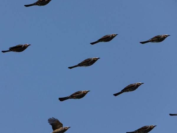 鳥の群れを撮影した写真に、41万人が腹筋崩壊! 「吹いた」「すごい瞬間」
