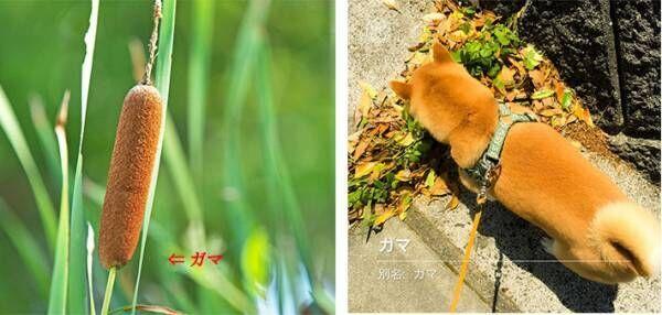 愛犬と散歩中、野花の名前をアプリで調べていると… 「完全に一致」「笑った」