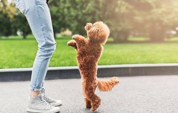ペットが自分の体を通して私たちに伝えてくれることとは