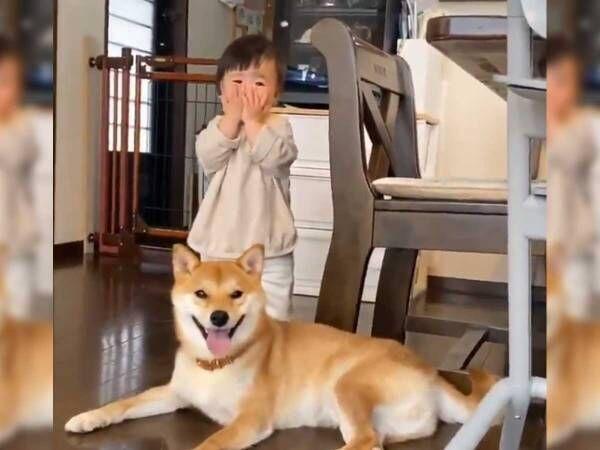 1人で「いないいないばあ」を楽しむ娘 それを見ていた柴犬が…?