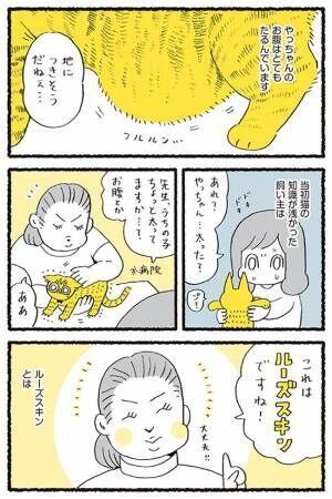 「触られるの嫌ニャ!」 『ルーズスキン』を触りたいと願う飼い主に、猫は…?