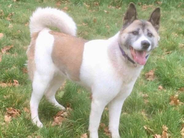 Skylor\'s Animal Rescue North Wales, U.K. Reg charity number 1179940