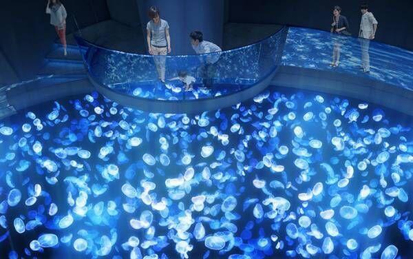 日本最大級の『クラゲ水槽』!? すみだ水族館の新エリアが神秘的…