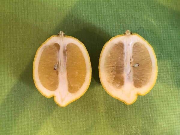 これお店で出てくるやつ!レモンを美しく切る方法
