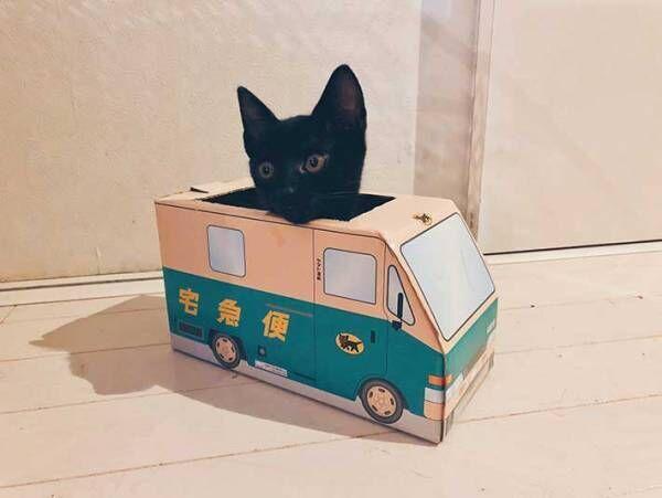 子猫にクロネコヤマトの箱を渡したら…? 結果に、41万人がくぎ付け
