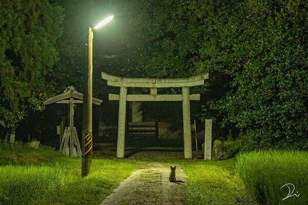 夜中2時ごろに撮影した神社 よく見ると『黒い影』が写り込んでおり…