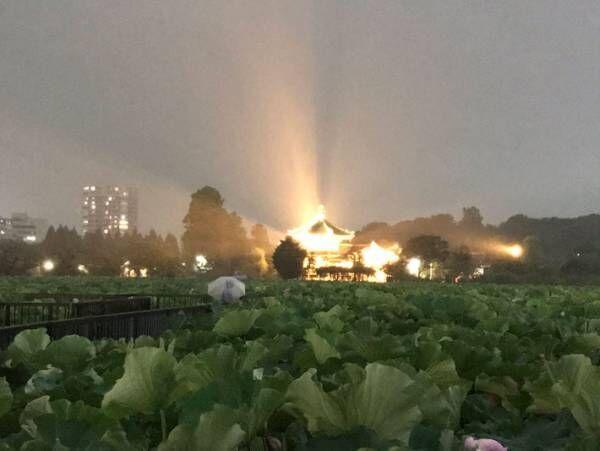ここは、極楽浄土? 上野の不忍池で起きた奇跡に腰を抜かす