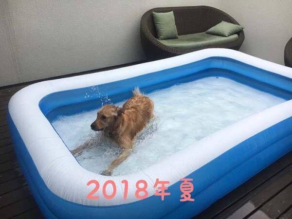 愛犬にプールを毎年用意した結果…? 2年後の姿に「笑った」「哀愁がすごい」