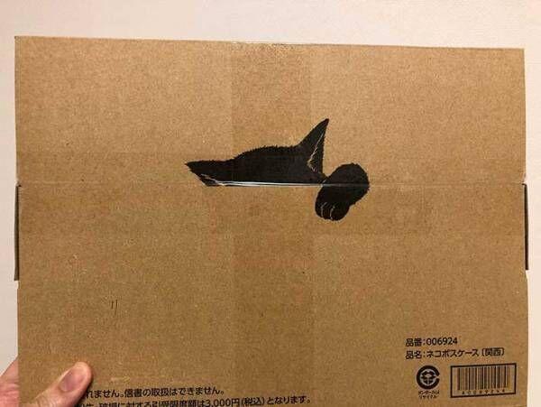 何かのぞいてる… クロネコヤマトで『小さな荷物』が届いたので、開けてみると?