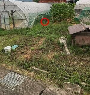 「猫を探せ!」 写真の中に潜む『猫』を探すことに、苦戦する人が続出