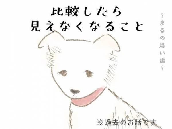 前の飼い主に『バカ』と言われた犬 しかし、引き取ってみると…?