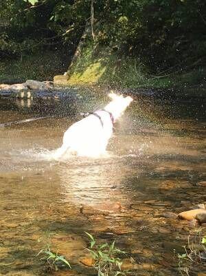 川で気持ちよさそうに水遊びをする犬 顔周りをよく見ると…?