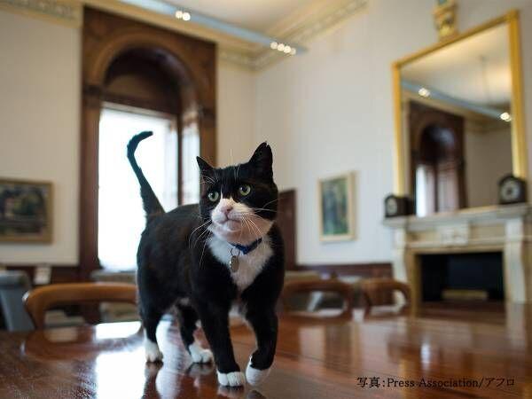イギリス外務職員の猫が辞表提出 「田舎で余生を過ごしたい」