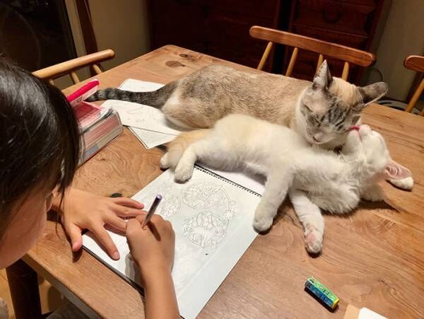 娘の前で仲良くじゃれ合っていた猫、最後のオチに24万人が吹き出す!