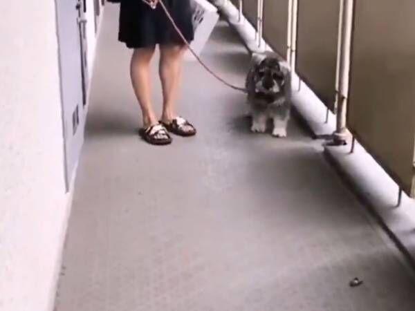 セミにトラウマがある犬 とった行動に「申し訳ないけど笑った」
