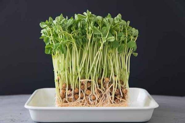 そんな野菜も!?意外と知らない勝手に育つ葉物野菜
