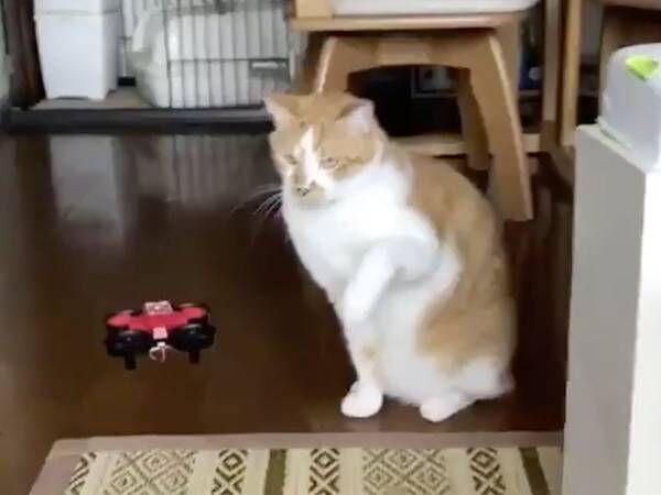 「想像以上」「声出して笑った」 3秒の『猫動画』に、吹き出す人続出!