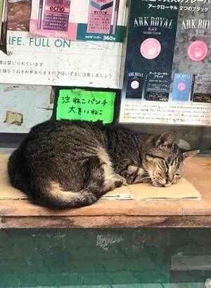 スヤスヤ眠る猫と『貼り紙』 思わず笑っちゃう内容がこちら!