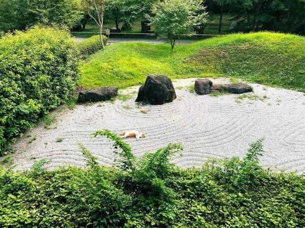 日本庭園のど真ん中で眠る迷惑客!? しかし、その姿に13万人が癒された