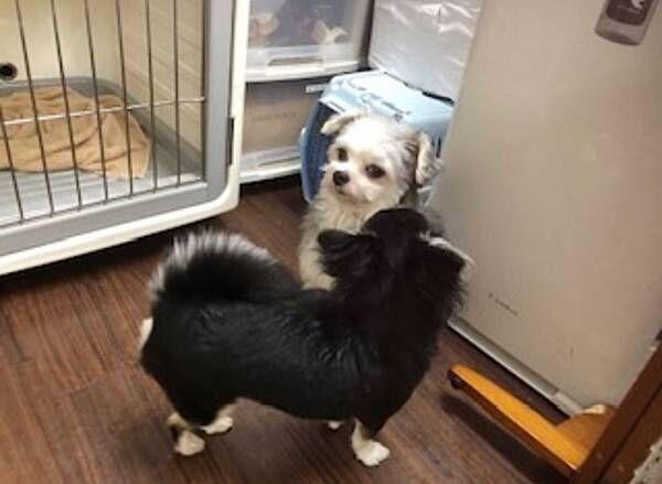 犬と人間に見せる表情の違いに爆笑! ペットホテルから送られてきた写真がこちら
