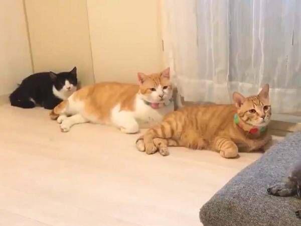 思わず二度見! 猫たちが見つめる先に「爆笑した」「これは自分もなる」