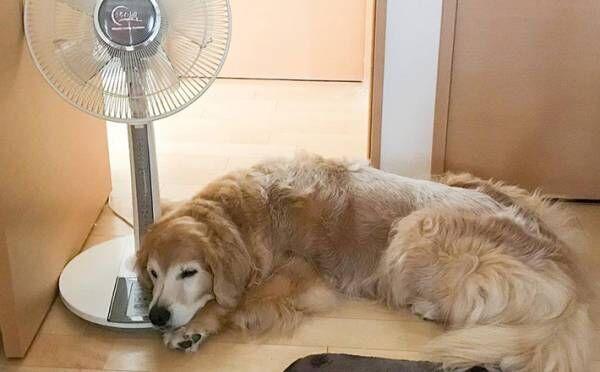 強い雨風に怯えていた犬と猫 飼い主に寄り添ったかと思いきや…?