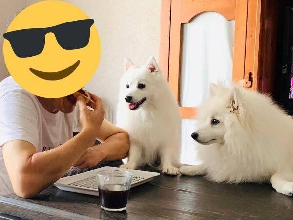 3匹の犬に囲まれている男性… 数秒後の展開に爆笑!