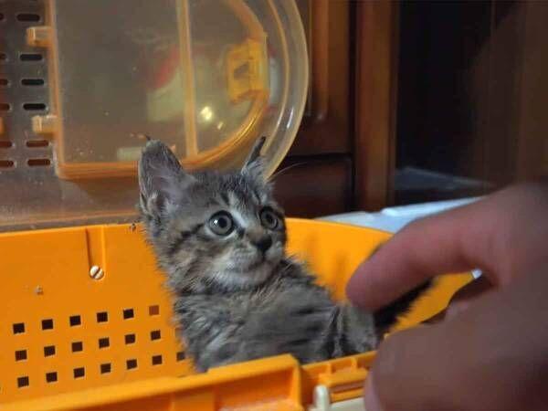 『獣医さん好きだわ』全身接着剤まみれになった子猫を診る獣医さんに注目