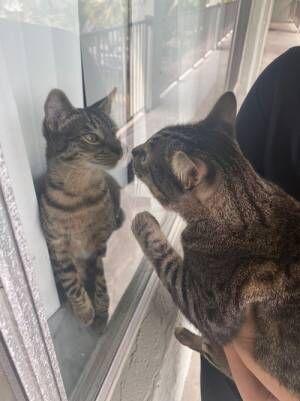 「激似な猫が引っ越してきた」 写真を見たら、マジだった