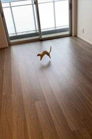 引っ越し先で大興奮! 飛び跳ねるフェレットが可愛いすぎる!