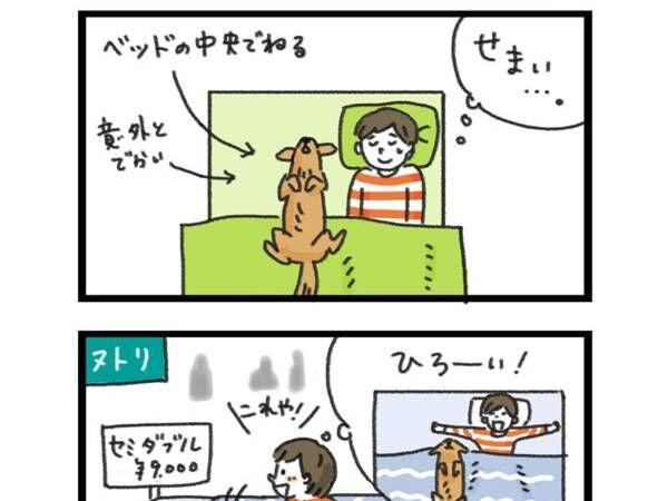 犬にベッドを占拠され、セミダブルを購入した結果…? 「笑った」「あるある」