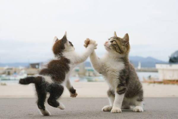 ハイタッチする2匹の子猫 完璧なポーズに11万人が息をのんだ