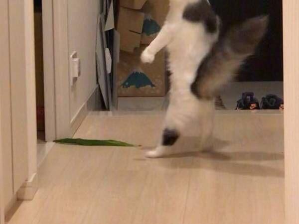 猫が驚く瞬間を激写すると…? 斜め上の姿に、4万人が爆笑!