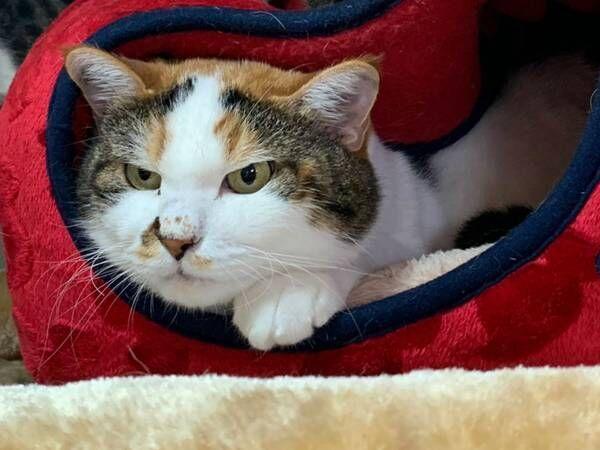 猫用ベッドの『間違った使い方』 飼い主が投稿した1枚に、クスッとする