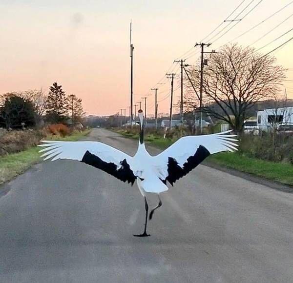 「車かと思った」追い越していったのは…? 優雅に走る姿に「すごい!」「初めて見た」