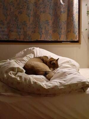 夜中トイレから戻ってきた女性が『ベッド』を見てあ然… そのワケとは?